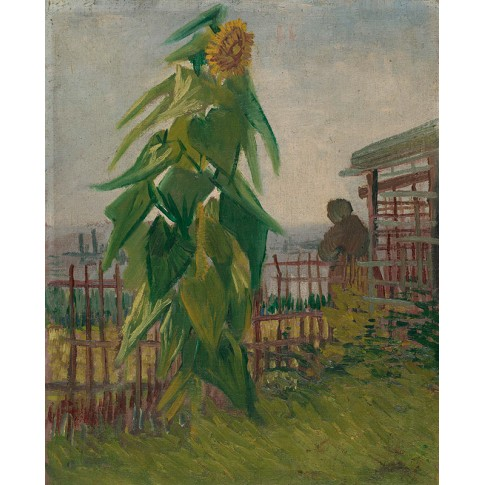 Van Gogh Giclée, Allotment with Sunflower
