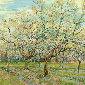 Van Gogh Giclée, The White Orchard